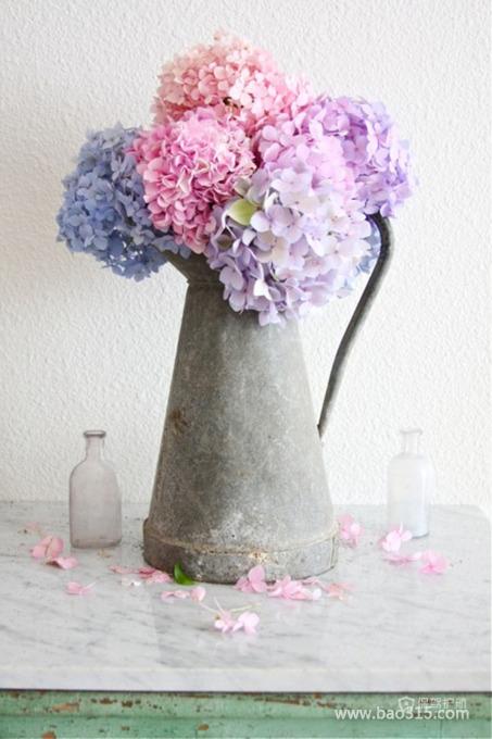 娇嫩的鲜花插在旧旧的茶壶中