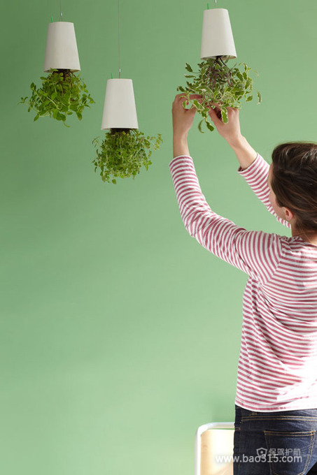 掉在绿色背景墙前面的清新植物