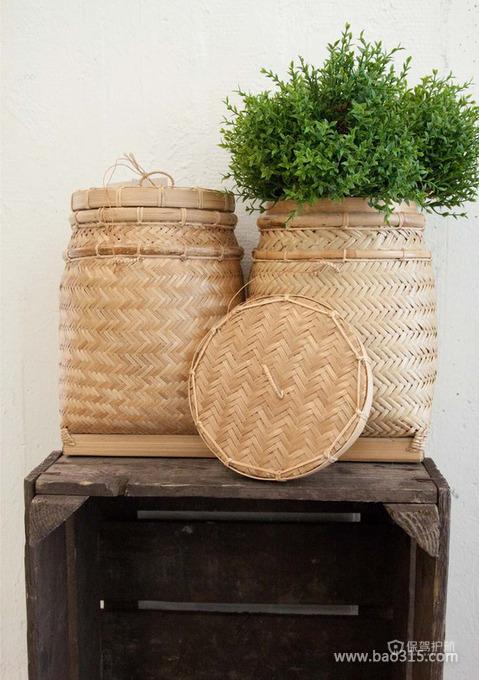 绿色盆栽走进居室环境