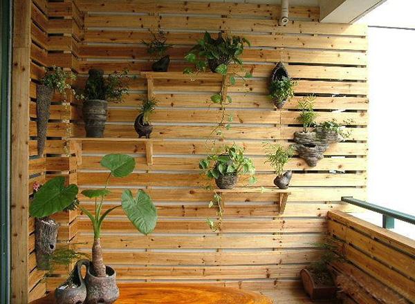 该墙面装饰特色在于原木色木板搭配上深褐色形状怪异的花盆,绿萝藤从上往下垂,美美的墙面花园,艺术感十足。