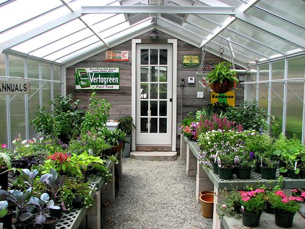 这是一个纯花园阳光房,除了种植植物以外,没有设计其他功能.图片
