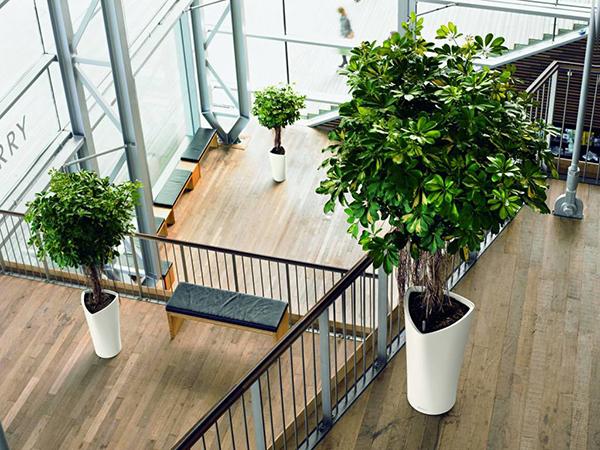 办公室风水植物摆放秘诀