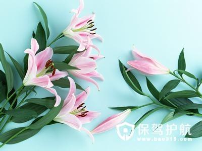 百合花的种植方法