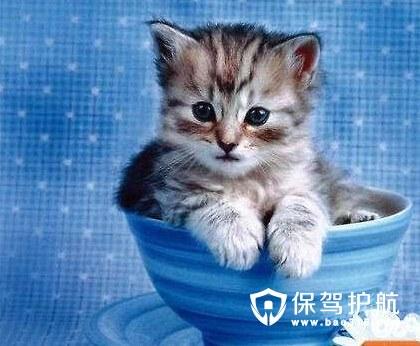 迷你而可爱,养宠物的朋友们,不知道有没有见过茶杯状的小猫小狗呢?