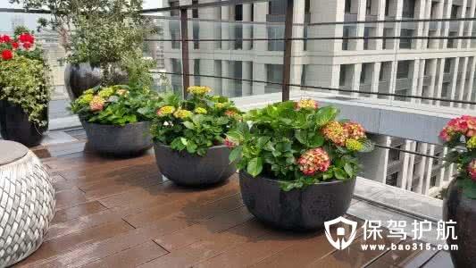 五种好看又好吃的阳台植物