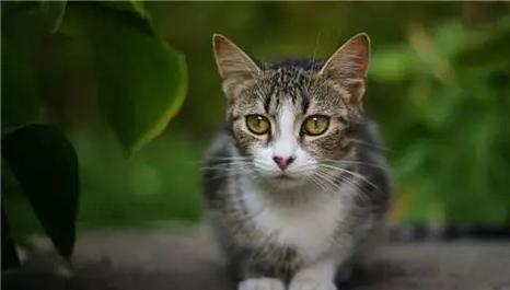 宠物对住宅风水是否会有影响?