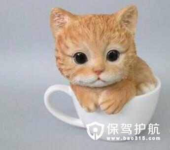 可爱萌宠茶杯猫多少钱一只 茶杯猫怎么养