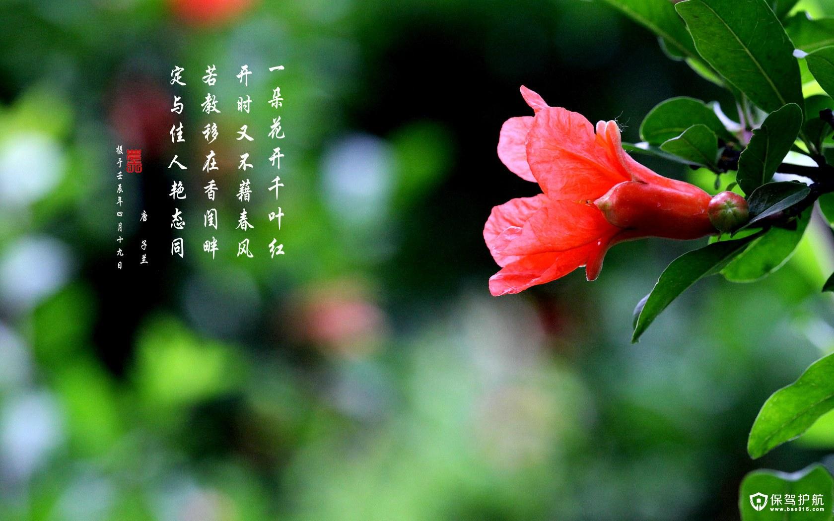 石榴何时开花,石榴花语是什么