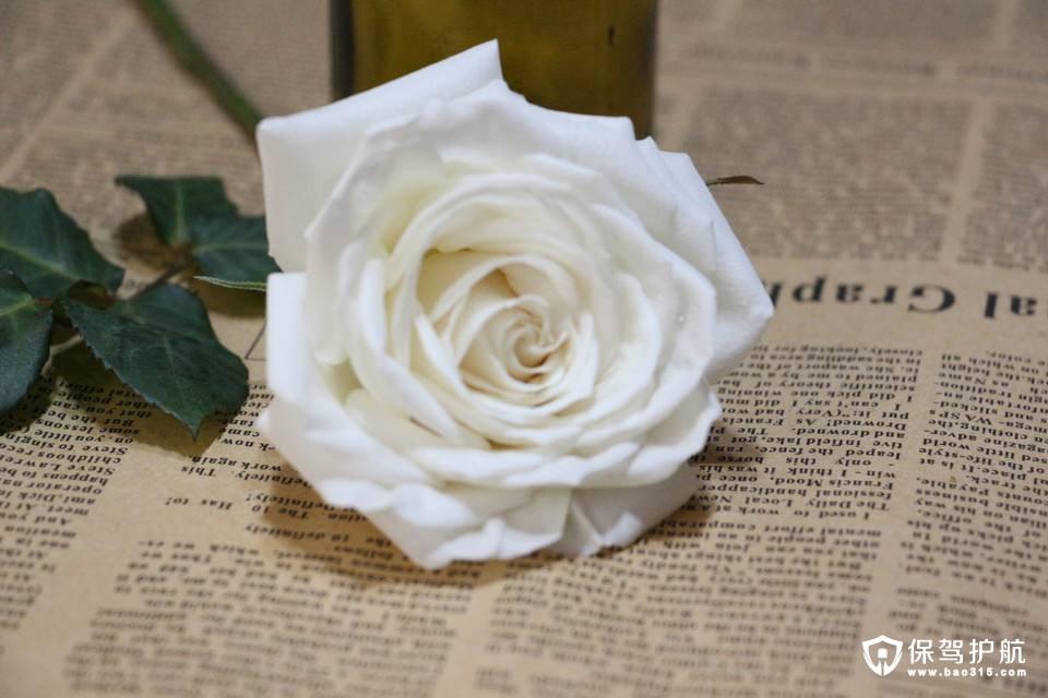 白玫瑰花语