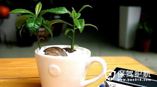 办公桌摆放植物风水