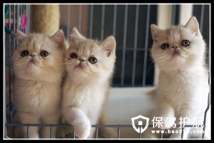 猫舍装修需要注意的问题