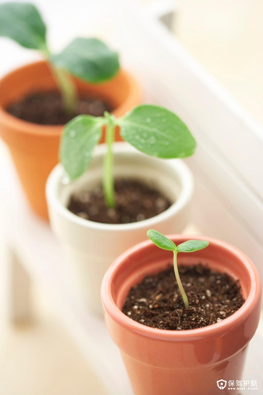 迎春室内绿植盆栽装饰攻略干货