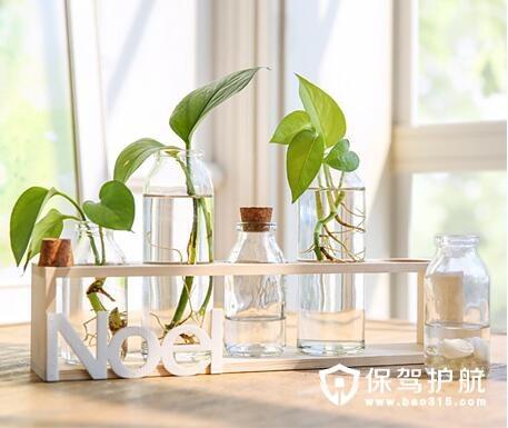 插花透明玻璃水培植物容器