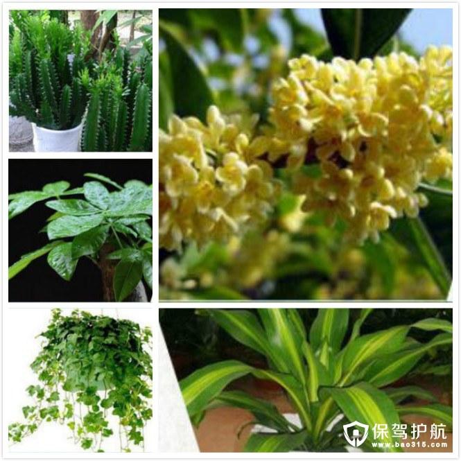 绿萝金心吊兰等植物