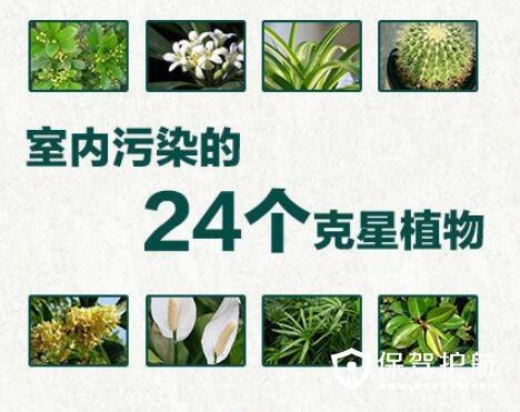 """天然""""空气净化器"""" 家里可以摆放的24种植物 """