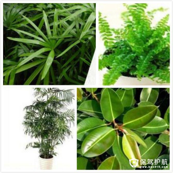 24种植物净化空气