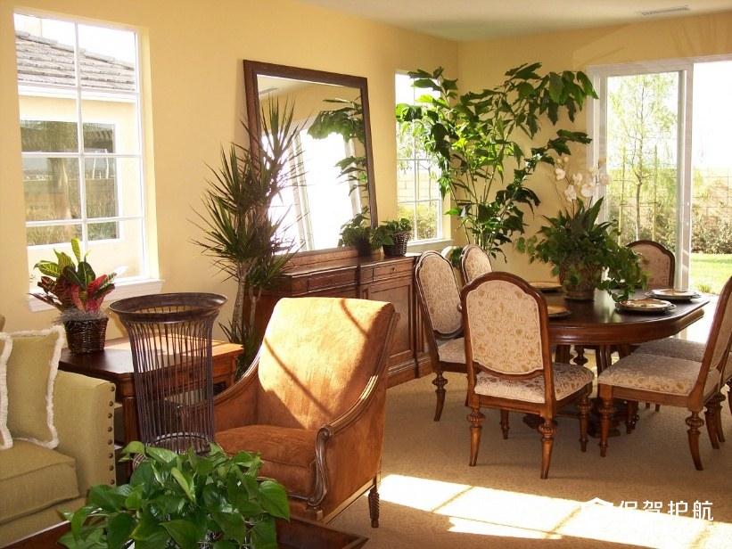 室内绿植装饰