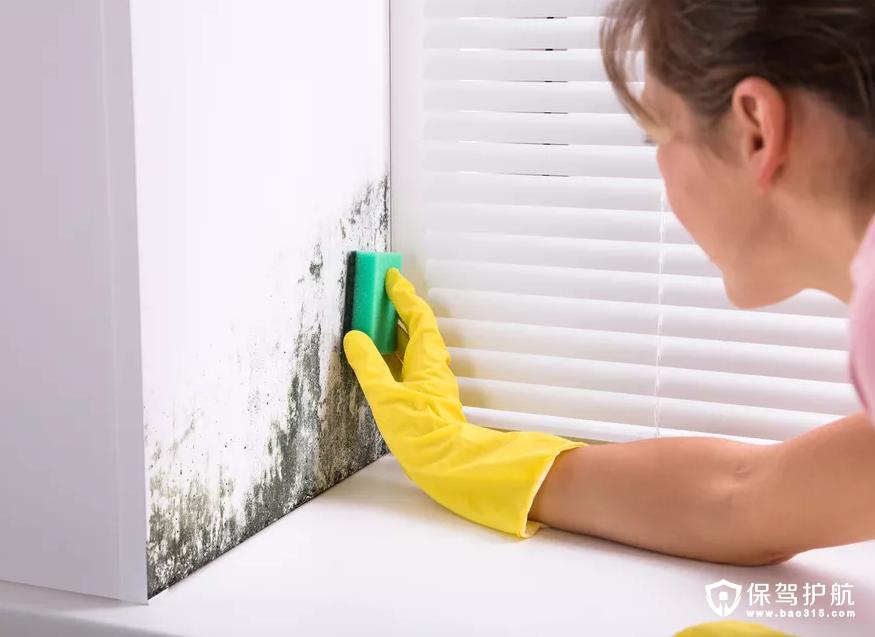 【生活小常识】关于霉菌的有害及教你如何摆脱家中每个表面的霉菌!(上)