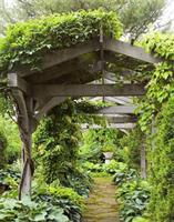 夏天,就想要一个这样的院子!