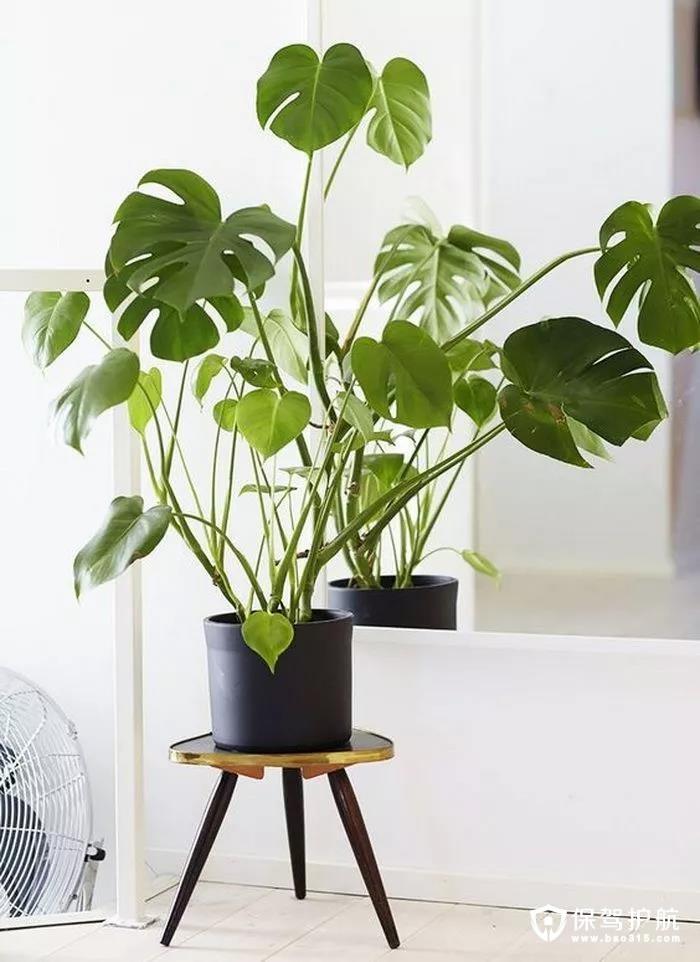 【家居装饰】刚装好的房子,养几盆绿植,不仅能净化空气还是很棒家居装饰品!