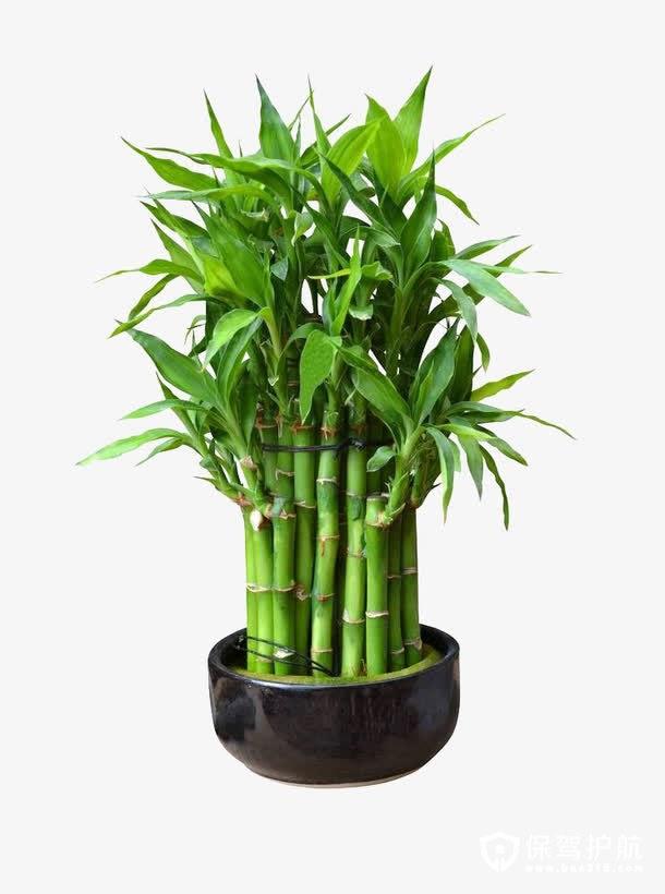 家居风水 家居装饰养什么植物好?养这八种植物招财又旺宅!