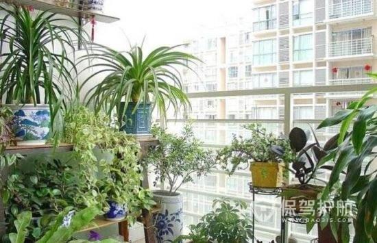 阳台种什么植物风水好?