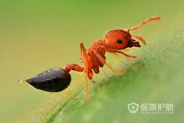 阳台蚂蚁种类-保驾护航装修网