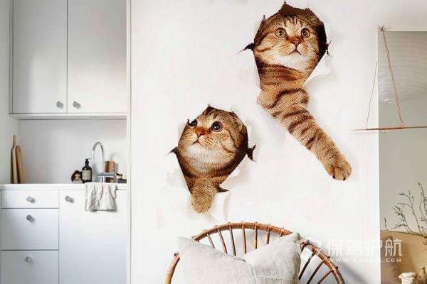 宠物店墙面装饰效果-保驾护航装修网