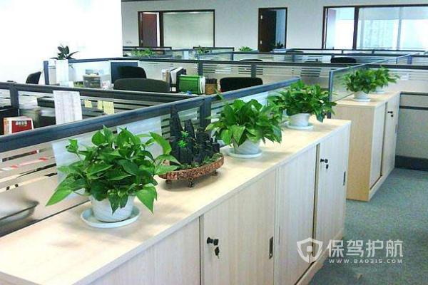 办公室绿植布局-保驾护航装修网