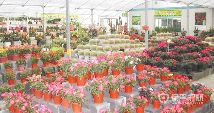 盆栽鲜花市场装修效果图