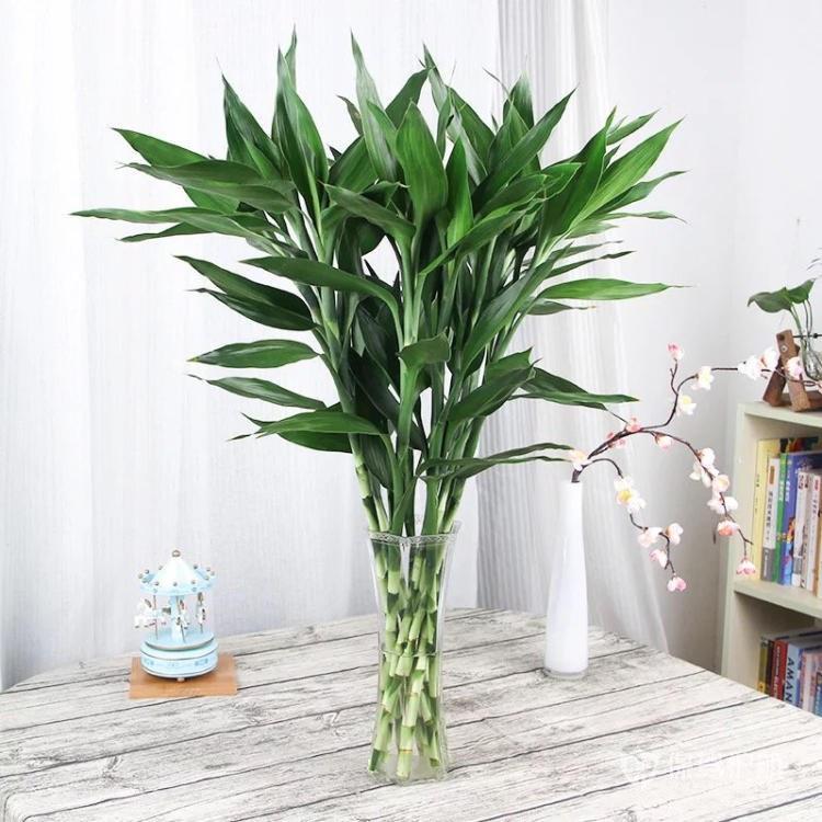 美甲店放什么植物好?美甲店植物擺放講究