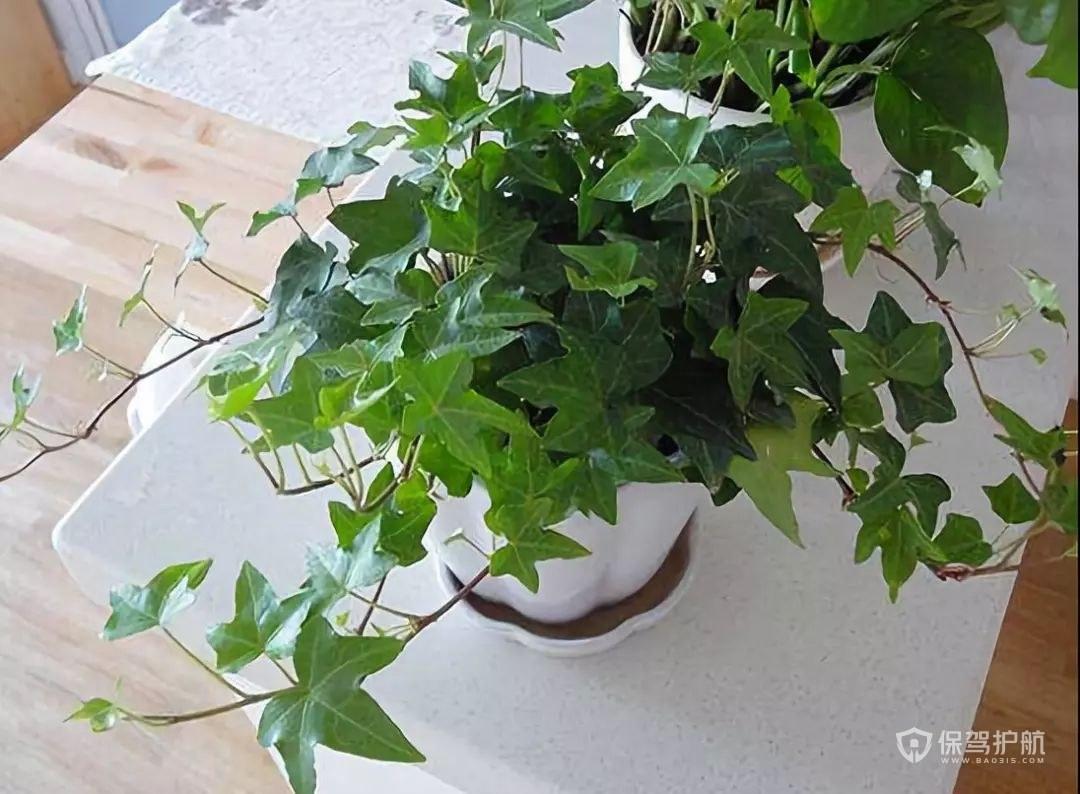 除甲醛的植物排名榜 最有效的除甲醛方法有哪些?