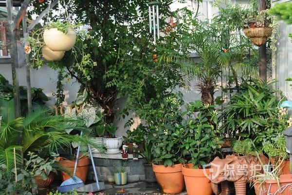 楼顶植物布局-保驾护航装修网