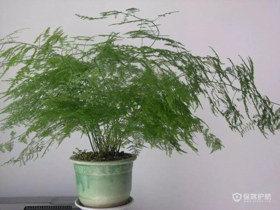 领导办公室放什么植物好?办公室植物摆放风水讲究