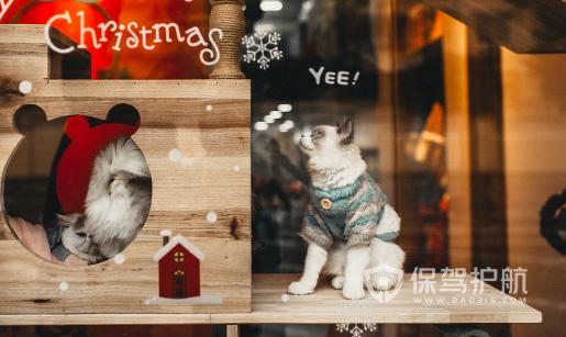 简约现代风格宠物店橱窗设计效果图