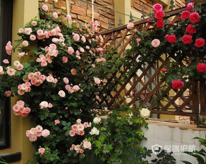 哪些植物適合做室外花墻? 室外花墻效果圖